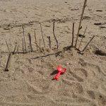 娘の芸術作品?浜辺で砂遊び